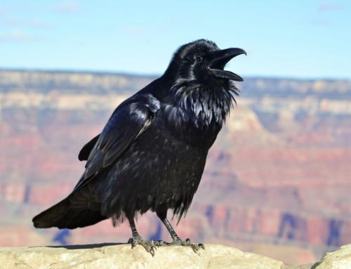 Prokura – czyli czarnego ptaszyska maszynka do robienia pieniędzy